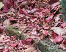 Už zase padá listí!